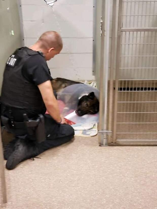 собака в больнице с хозяином