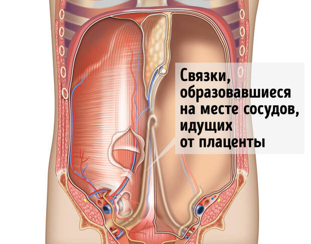 7 популярных заблуждений о нашем теле, на которые ученые поставили штамп «Опровергнуто»