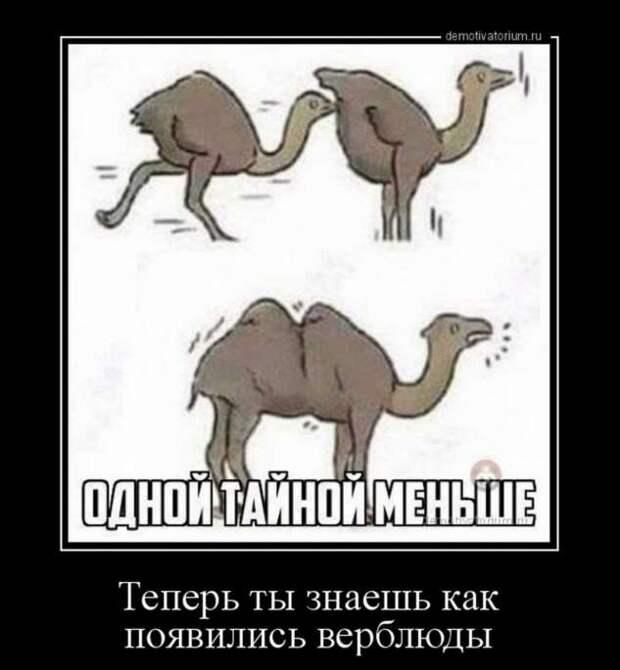 5402287_zabavatutza64214051910202029 (633x685, 35Kb)