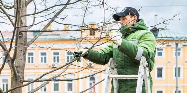 На Академика Комарова кронировали деревья