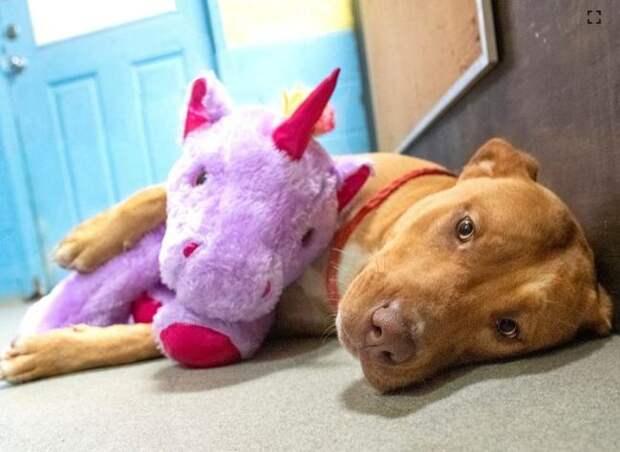 Бездомный пес несколько раз похищал мягкую игрушку из магазина