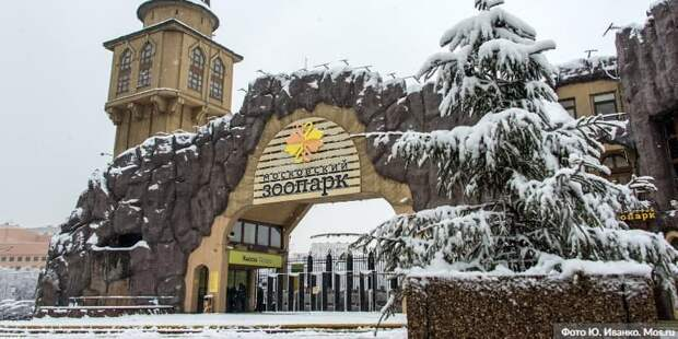Умер президент Московского зоопарка Владимир Спицин Фото: Ю. Иванко mos.ru