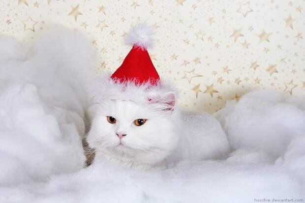 3166706_Santa_Cat_____by_hoschie (700x466, 57Kb)