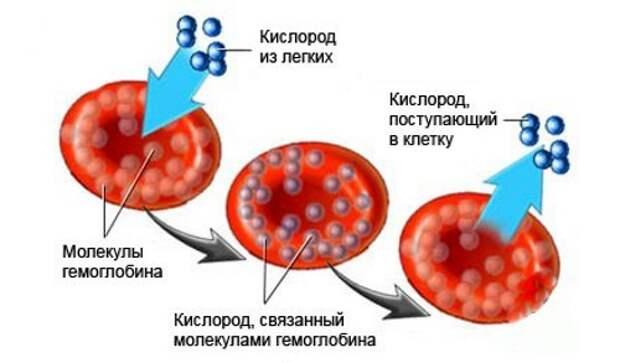 Симптомы и нюансы питания при низком гемоглобине