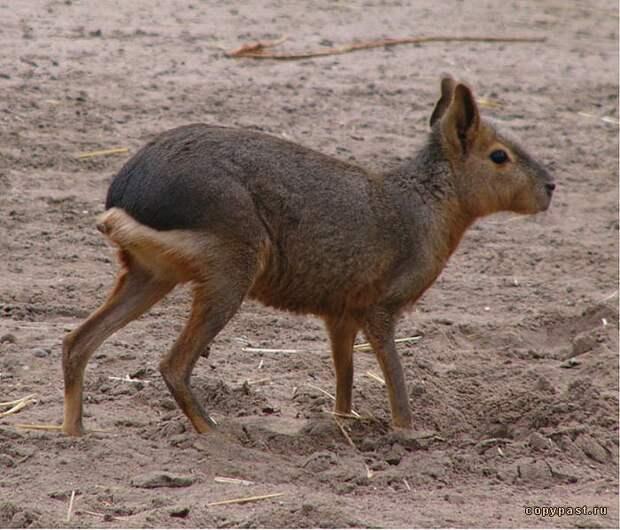 Южная Америка - Большая энциклопедия животных