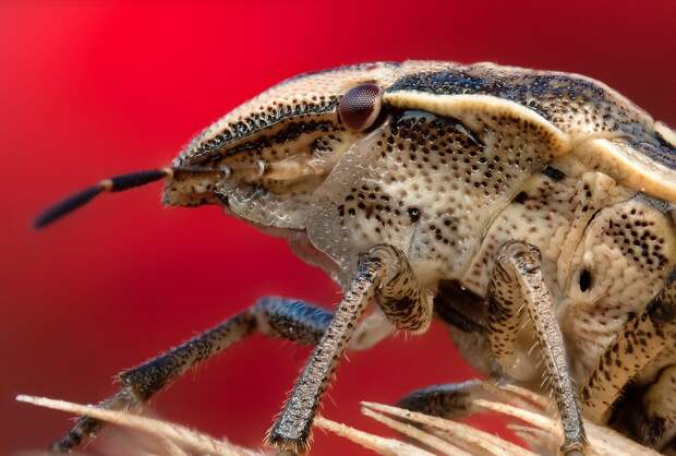 insects14 Портреты насекомых
