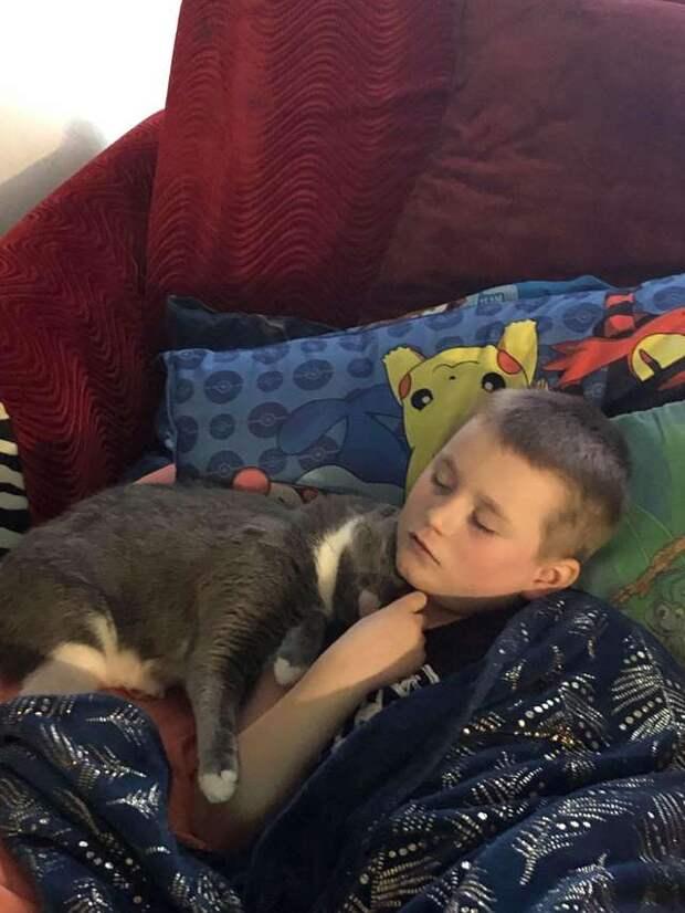мальчик с кошкой