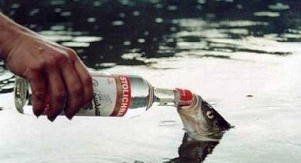 Интересные и малоизвестные факты про алкоголь, о которых вы, возможно, не догадывались