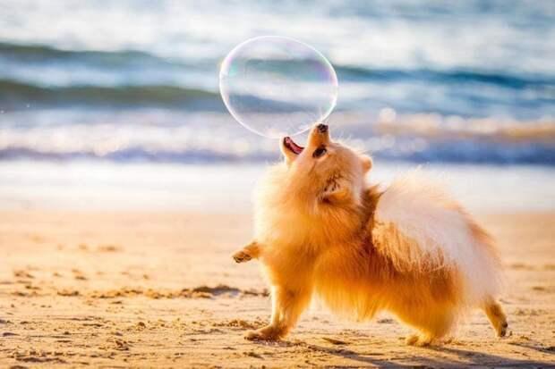 Победитель в категории «Собаки за игрой» великобритания, животные, интересное, конкурс, собака, собаки