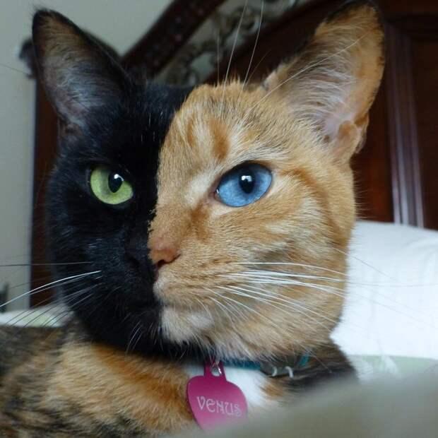 Кошка с кошкой: творчество природы на мурлыках