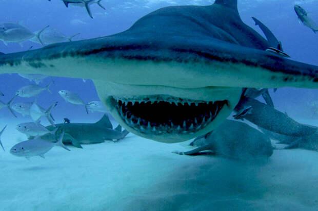 Как защититься от акулы и что делать, если она напала