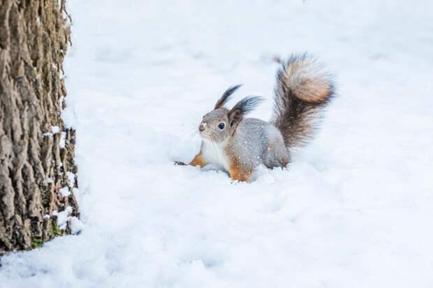 Небольшой снег возможен в Удмуртии в среду