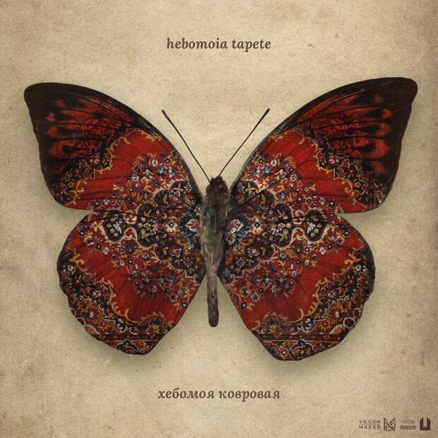 6 фото бабочек, которые подстраивались под жизнь в России