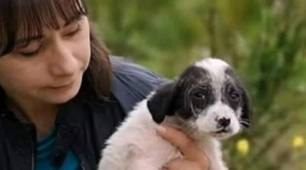 Дрожащий щенок-сирота прятался в зарослях кустарника, но чьи-то руки внезапно подняли его с земли