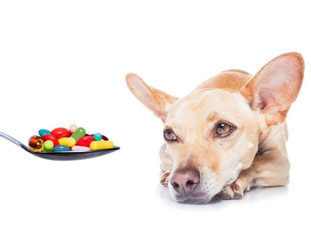 Как лучше спрятать таблетку в еду собаки?