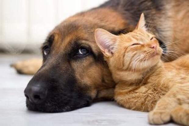 Кошки и собаки могут помнить события, которые произошли много лет назад