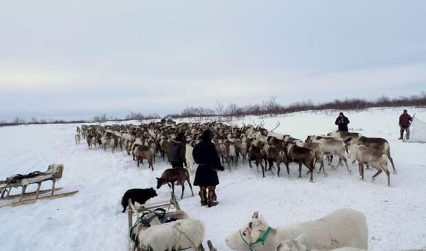 Руководитель НАО открестился от идеи слияния с Архангельской областью