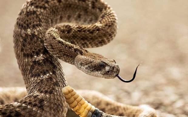 10 глупых мифов о змеях