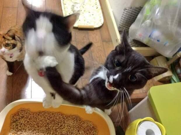 Битва котов за еду