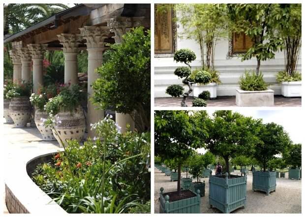 Любые емкости могут стать настоящим домом даже для деревьев.