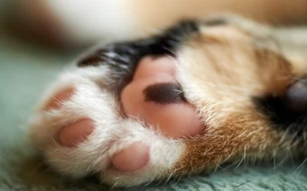Уральские депутаты поддержали законопроект о запрете «мягких лапок» у котиков