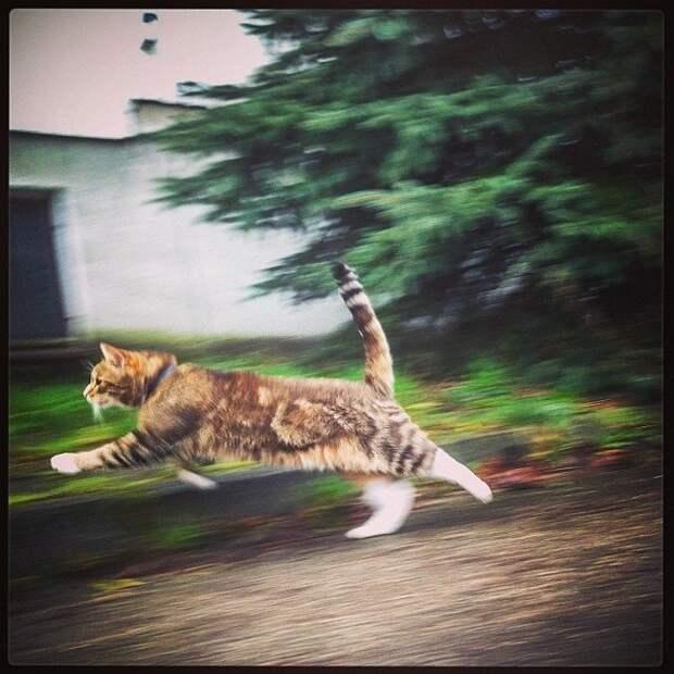 """11. Говоришь """"привет"""" и """"пока"""", когда кот забегает в комнату и выбегает из нее домашний питомец, животные, кот, прикол, юмор"""