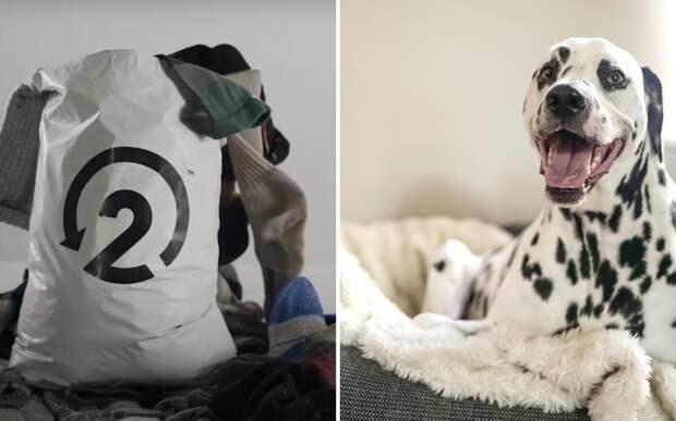 Компания решила превращать старые носки в лежанки для собак ради экологии