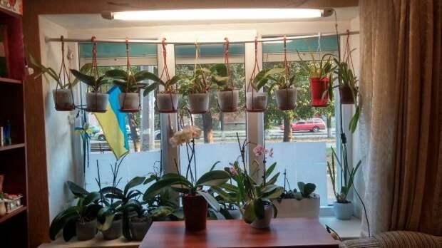 Орхидеи в интерьере квартиры: фото растений, уход и особенности (30 фото)