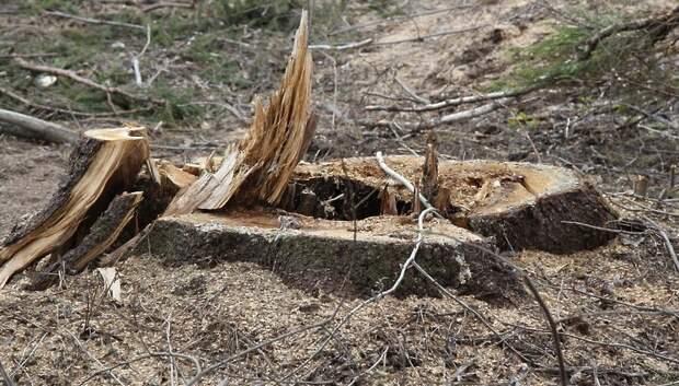 Более 40 деревьев упало в Подмосковье за сутки из‑за сильного ветра