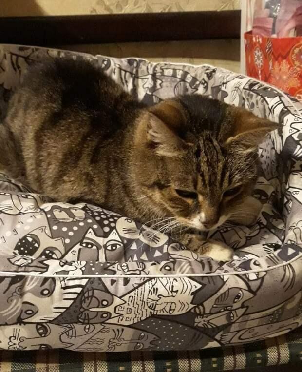 Обретение нового дома бродячей кошкой