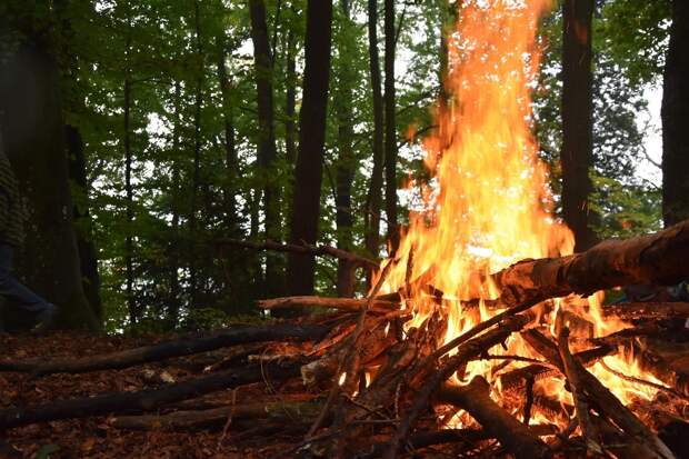 Запрет на разведение костров в лесах Удмуртии продлили до сентября