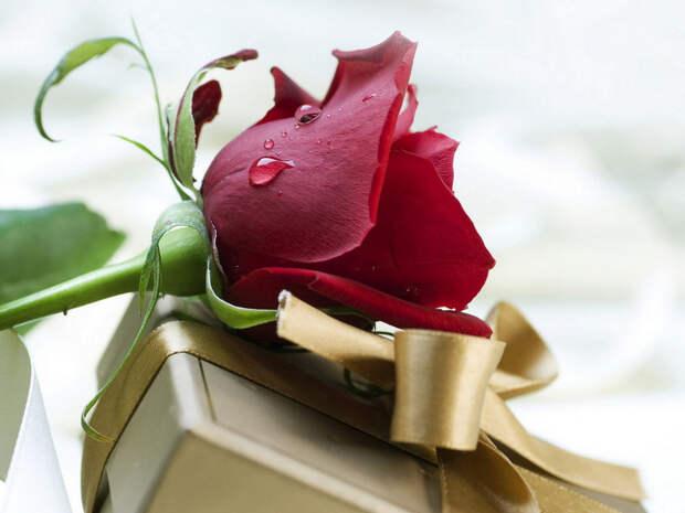 Красная роза и подарок