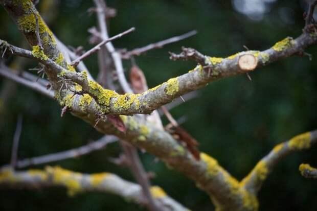 Много ли в районе сухостойных деревьев? — новый опрос