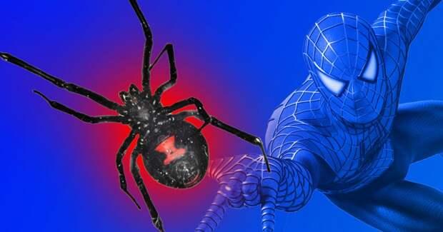 В Боливии 3 мальчика решили стать Человеком-пауком и позволили ядовитому пауку их укусить