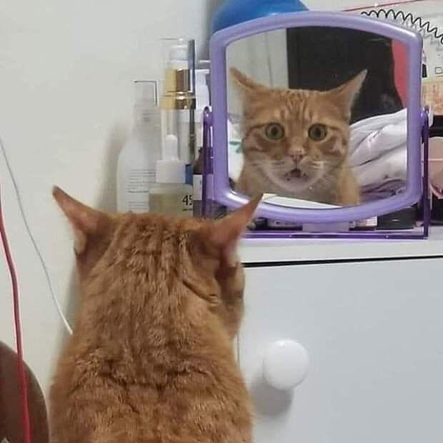 Фото №3 - Зовите психолога: породы собак и кошек с самым сложным характером