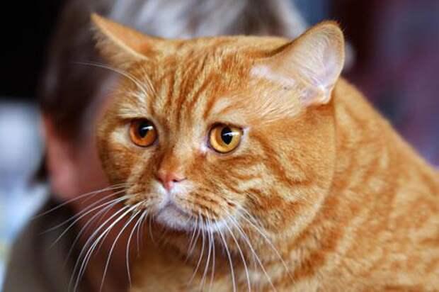 Если кошка пришла в дом -  что это означает и как себя вести
