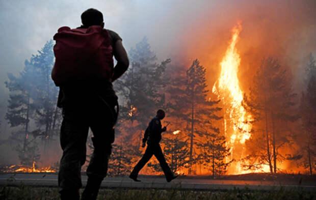 Почти 250 тысяч гектаров леса горит сейчас в России