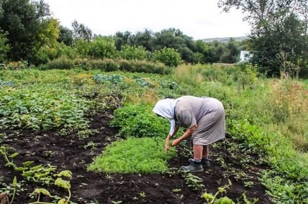 Сельские заметки. Как прожить пенсионеру в деревне?