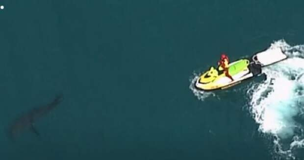 В Австралии огромная белая акула снова убила серфингиста