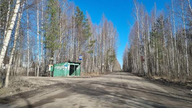 Дачный автобус в Череповце могут запустить уже на этой неделе