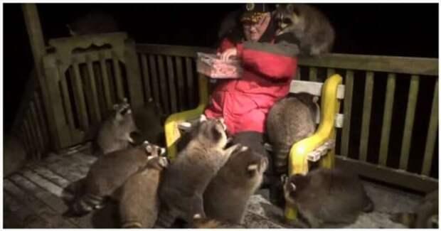 Ночной дожор: мужчина кормит банду енотов сосисками и печеньем (1 фото + 1 видео)