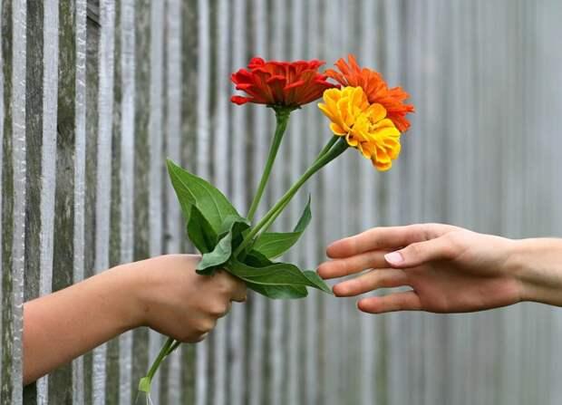 В Войковском проведут конкурс любительских цветников