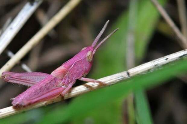Животные необычного цвета (25 фото)