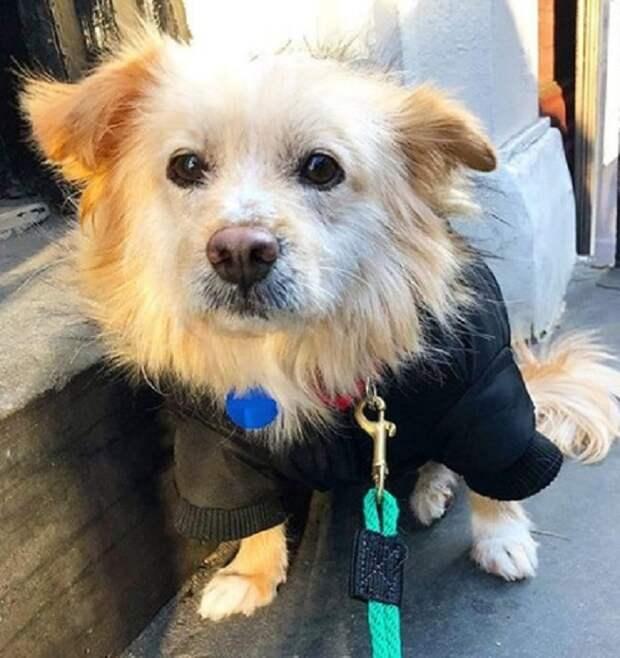 Никому не нужная собака с чесоткой страдала от голода и одиночества, ожидая помощи