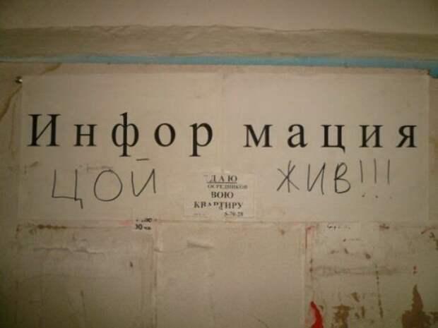 объявление, надпись, магазин, прикол