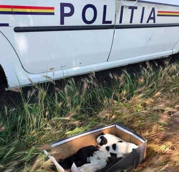 «Она мечтала их накормить!» Собака бродила по улицам с едой во рту, разыскивая потерянных щенков…