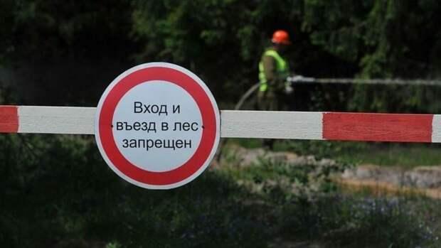Леса Тюменской области закрыли для посещения