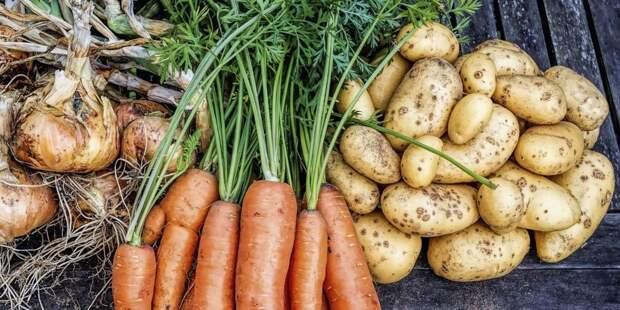 Врач рассказала, почему не стоит есть картофель и морковь