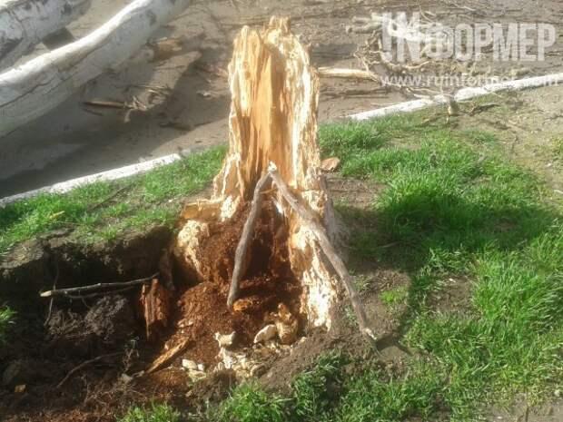 В Севастополе деревья ломаются как спички