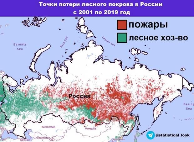 Потери лесов в России, высокая рождаемость на Сахалине и депопуляция северного Китая